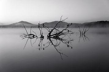 Alberi in lago