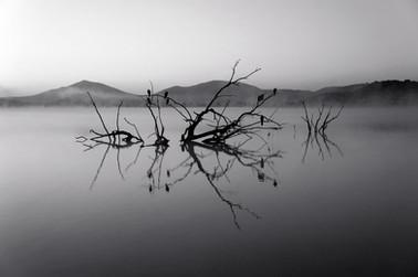 Árvores no lago