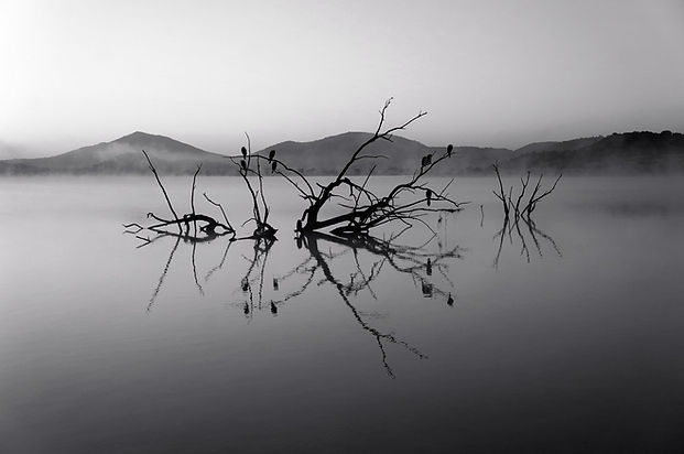 Trees in Lake