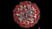 cortecoronavirus.png