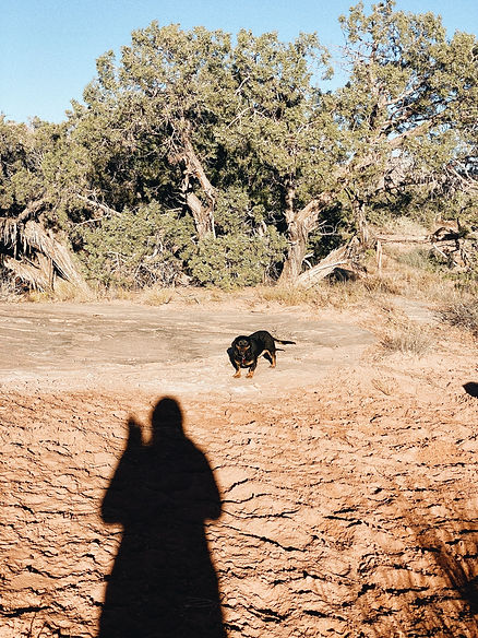shadow of a girl waving and small dog in desert