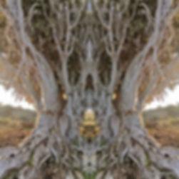 427692058_mirror4.jpg
