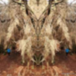1926209086_mirror.jpg