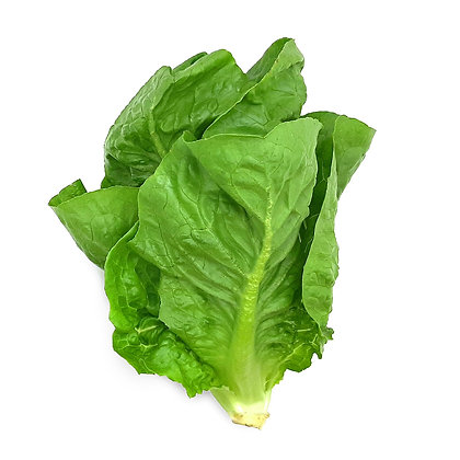 Lettuce, Hydroponic (Baby Romaine)
