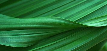 Leaf Background.jpeg