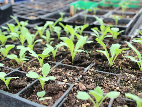 THE IMPORTANCE OF COMMUNITY GARDENING: GET INVOLVED!