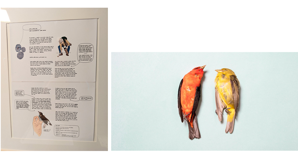 Left, illustrations by Annie Novak. Right, photography by Sophie Butcher. Photos courtesy of NYC Audubon.