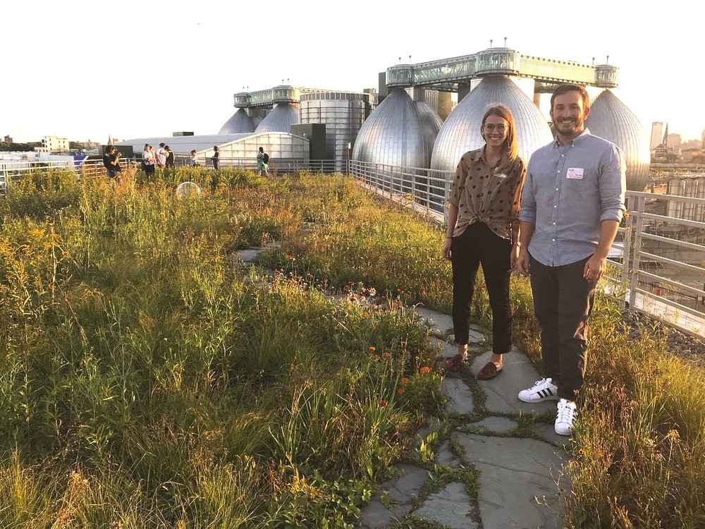 Photo of the Greenroof from the Kingsland Wildflowers website