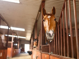 HorseInStall.jpg