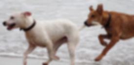 dogs on beach.jpg