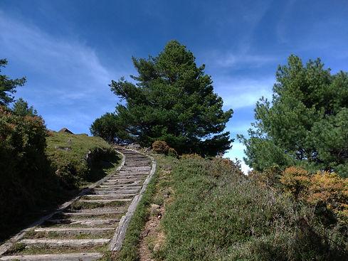 鹿林山步道.jpg