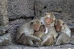 ลิงในพระปรางค์