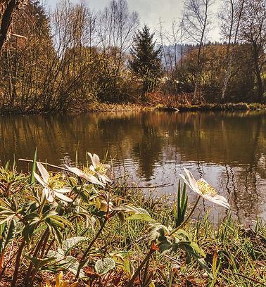P1830836_Dorfweiher.jpg
