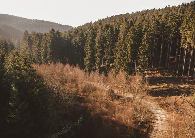 Der Buchholzweg