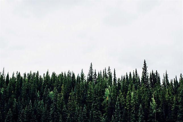 Canadian Treeline_edited.jpg