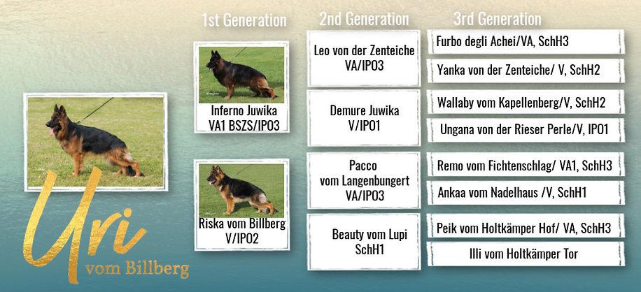 uri pedigree a.jpg