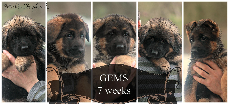 7 weeks collage