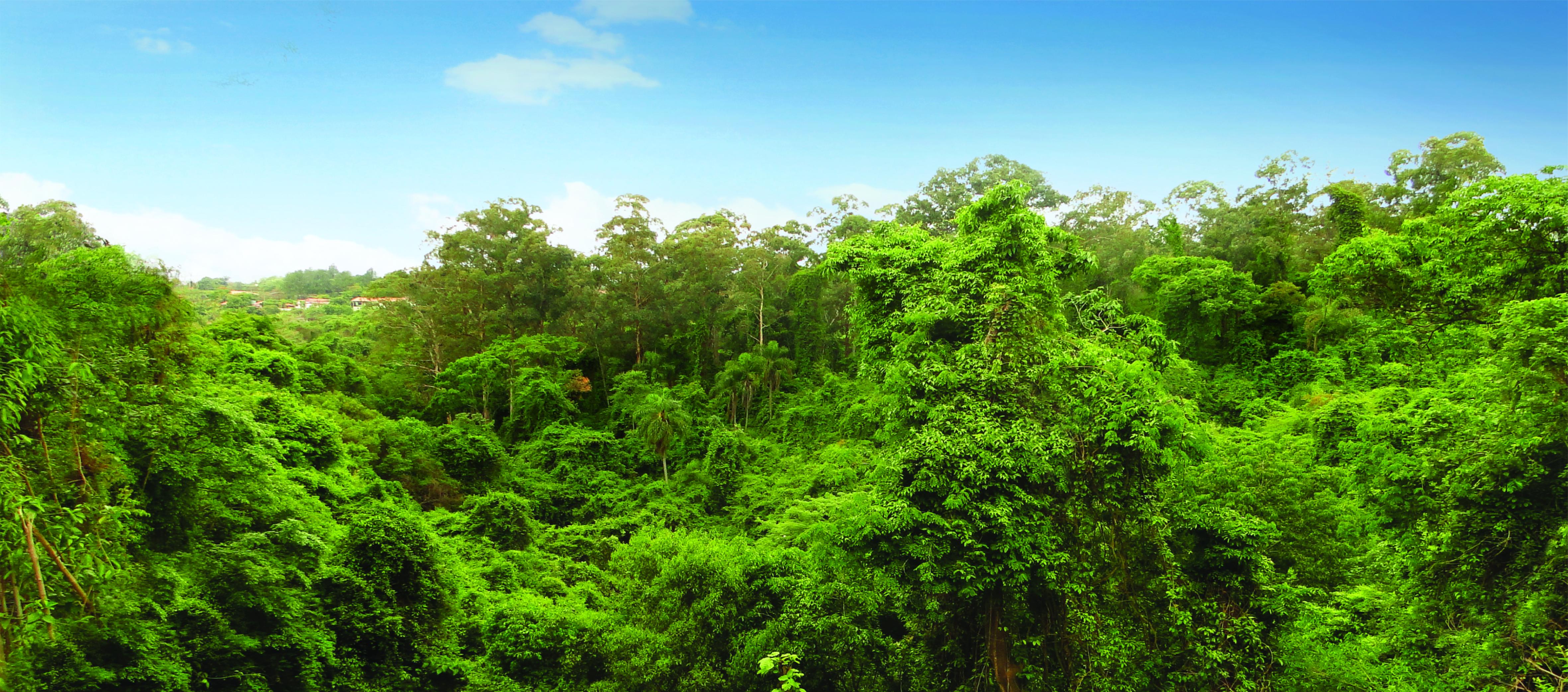 Reserva florestal local