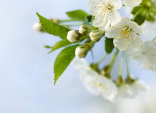 12 bonnes raisons d'adopter l'huile essentielle de Litsée citronnée