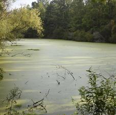 Huge lake with gators