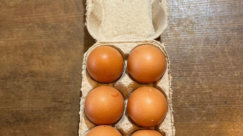 Large free range Hens eggs