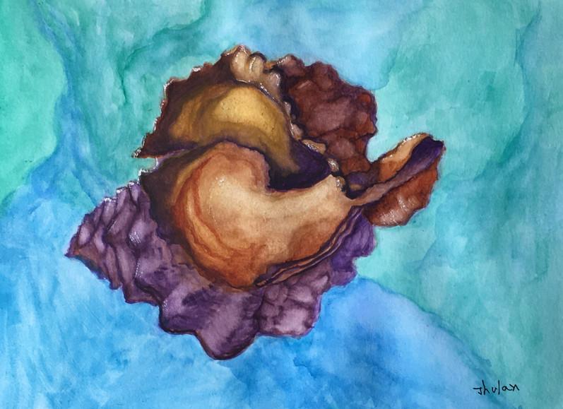 shell study9x12watercolor.jpeg
