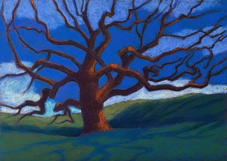 Alice's oak,corporate woods.pastel 13x18