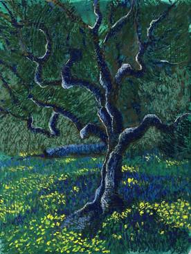 olive tree 10x13 pastel on gesso .jpg