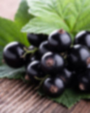 fresh-ripe-black-currant-with-original-l