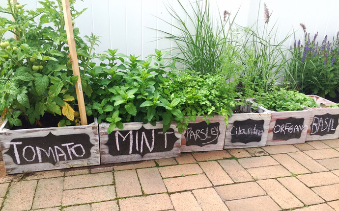 5 Herbs to Grow, Not Smoke