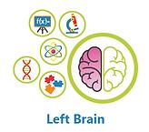 left brain.png
