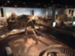 ロイヤルティレル恐竜博物館