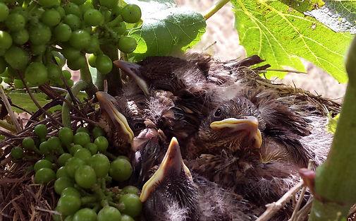 miguelbirds.jpg