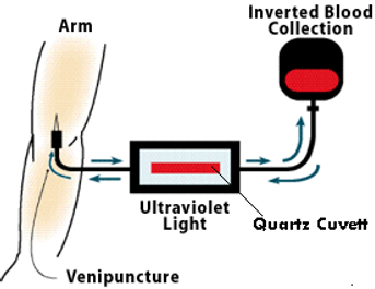 UBI Diagram.png