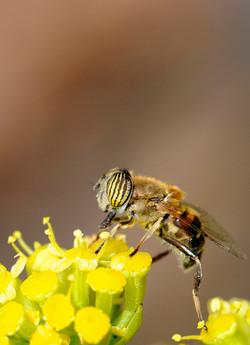 Adicta al polen, Islas Canarias