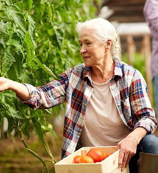 bigstock-farming-gardening-old-age-an-16