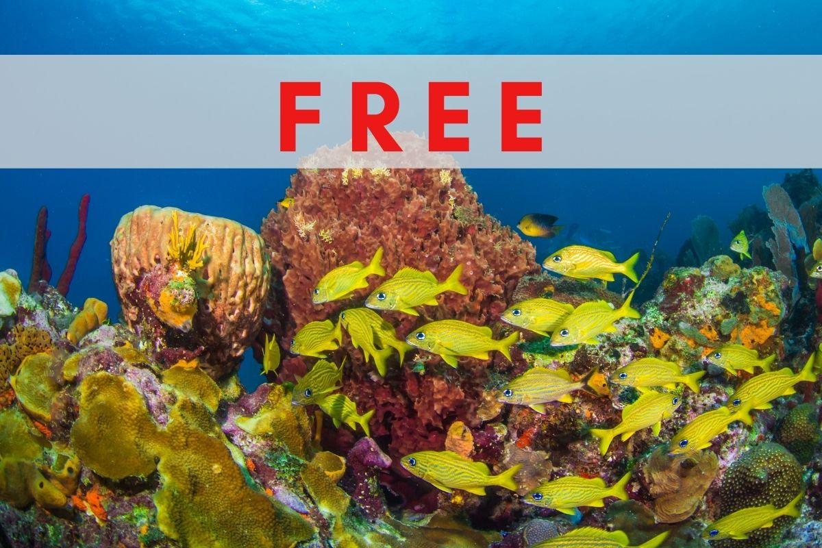 Top 12 Caribbean Coral Reef Fish