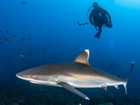 The Next Step | Scuba Diving Blog