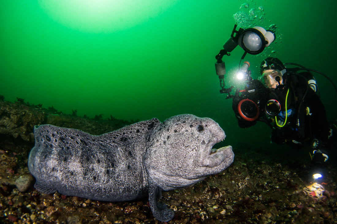1-on-1 Underwater Photography Class