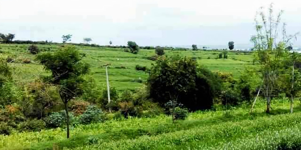 Kadu Krushi / Jungle Farming