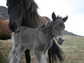 The foal season has begun!