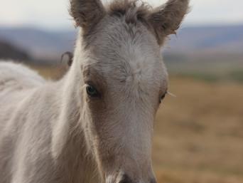 More foals!