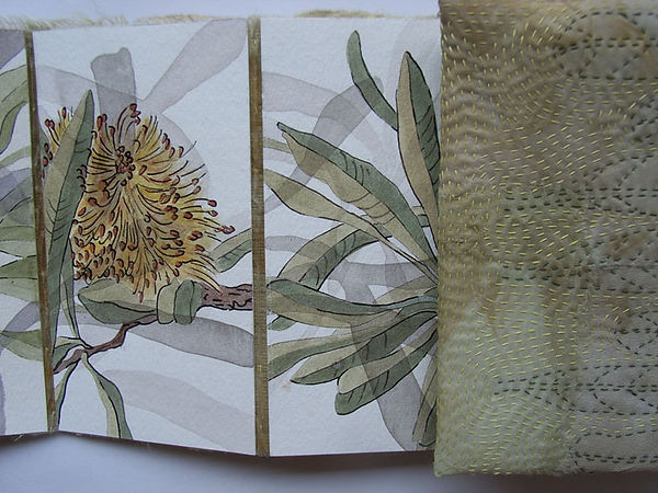 Banksia book-Hilary Peterson.jpg