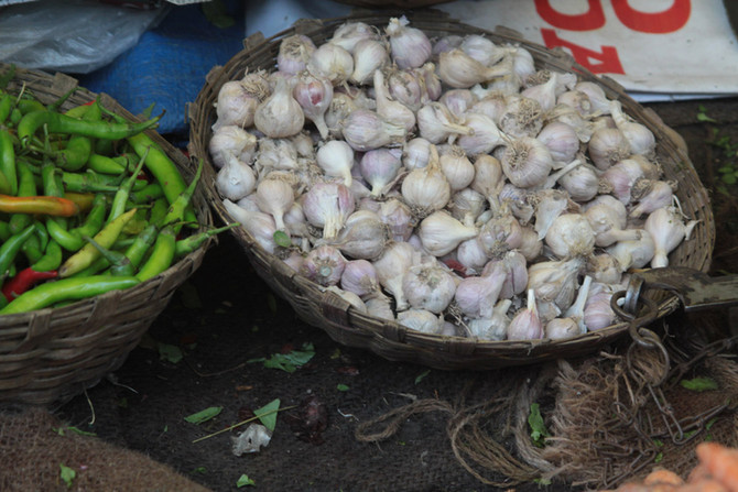 Volunteers Needed at Olde Mistick Village Garlic Festival on September 16th and 17th