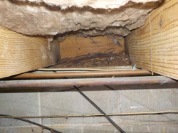 Rotten wood in crawlspace