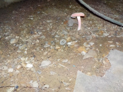 Hoover crawlspace inspection