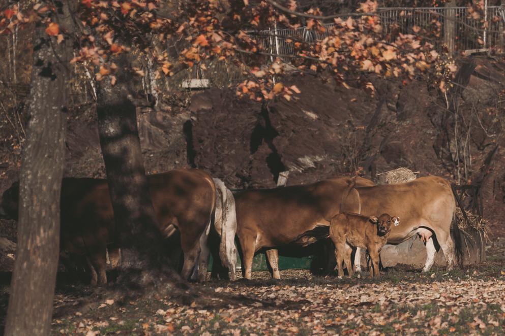 Photo produit de la ferme