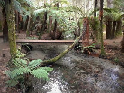 Waipa Stream