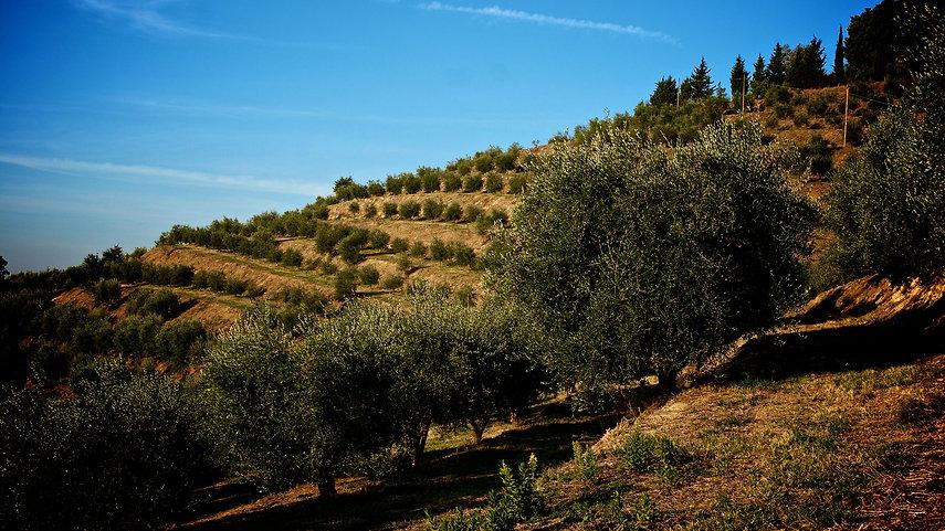 olivete_MG_3240.jpg