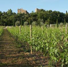 Corvento Vineyard